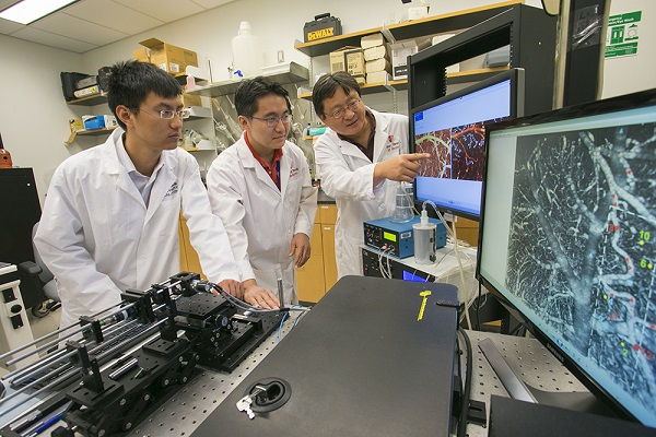 Stony Brook, NY; Stony Brook University: Yingtian Pan, Associate Professor, Biomedical Engineering and colleagues Jiang You and Kicheon Park use neuroimaging techniques to show how cocaine shuts down blood flow in the brain.