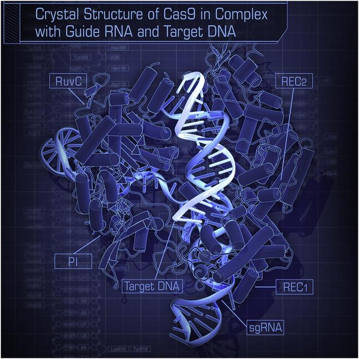 Cas9 complex.jpg