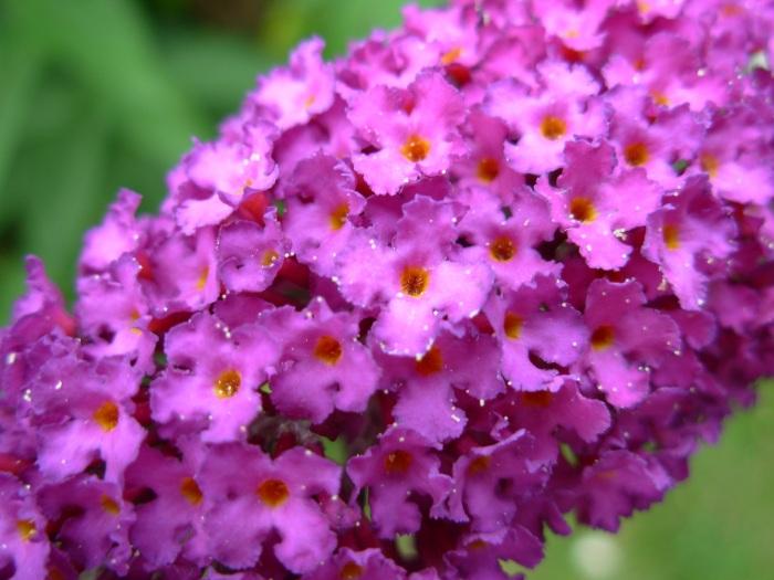 Microflowers