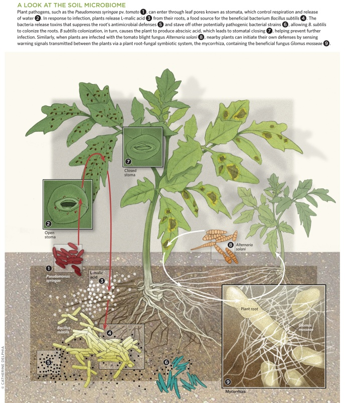 Plant Microbiome
