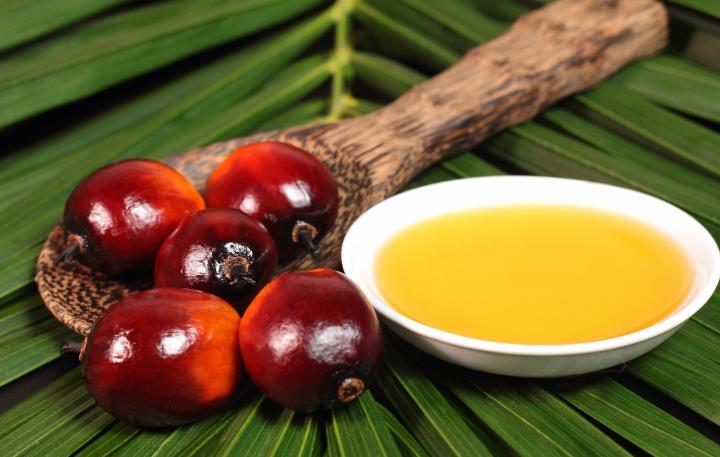 palmoil.jpg