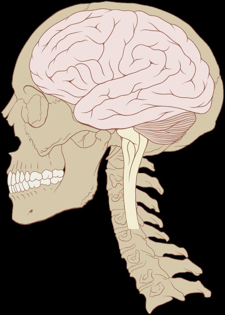 neurogrid
