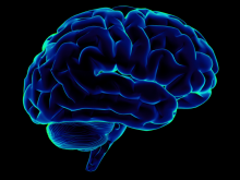 Figure 1. Mammalian brains can be influenced by non-genetic and Allele-Specific expression