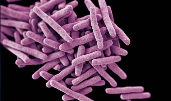 Caleb Peptide Microarray