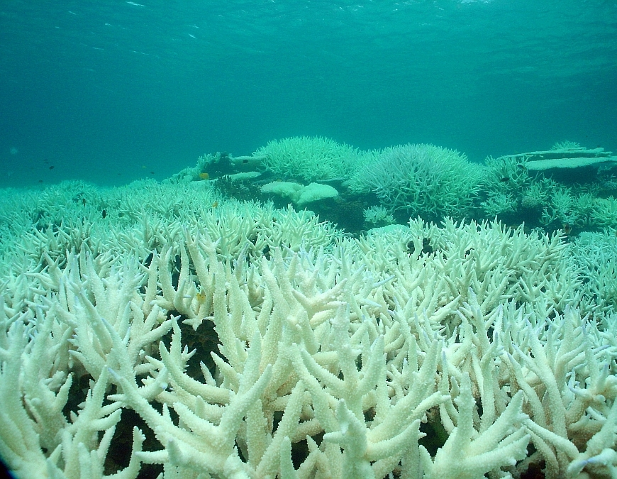 Figure 1. The Great Barrier Reef is discolored due to severe coral bleaching caused by global warming.