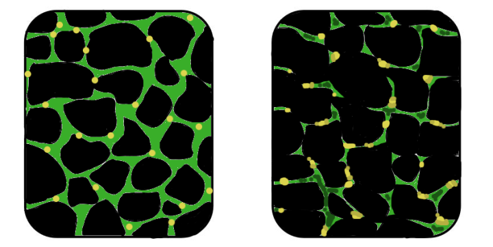 Figure 1: This is an illustration depicting the difference between healthy muscle cells (shown on the right) and muscle cells affected by muscle dystrophy (shown on the left). Due to the degeneration of the muscle cells, they will appear much smaller than usual.