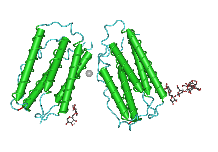 Figure 1: Type 1 IFN protein.