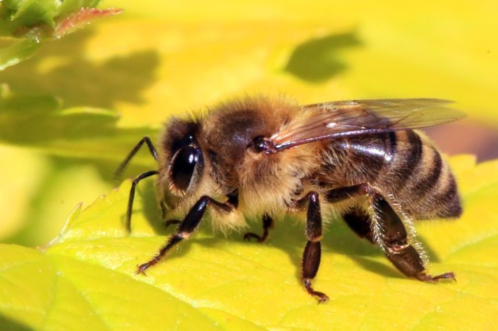 Figure 1. Acoustic analysis of buzzing from foraging bees provides a faster and less invasive method of monitoring bee pollination.