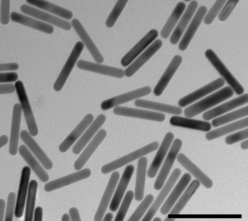 Figure 1 Lipid-coated gold nanorods used to study transfection efficacy of HSP promoters