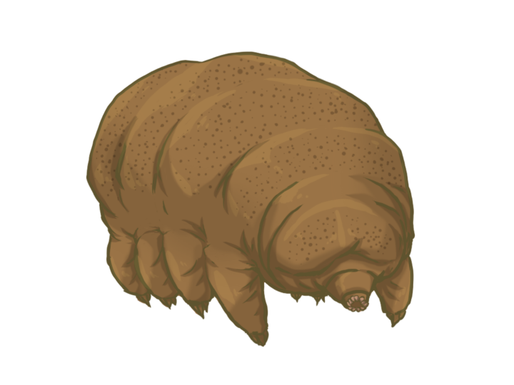 Figure 2. Researchers predict that tardigrades can withstand the most extreme possible scenarios of astrophysical events.