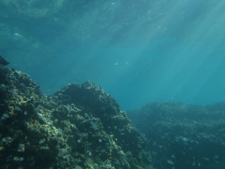 Figure 1. The benthic zone, which includes the sea floor, sediment, and surrounding waters, is the lowest ecological level in a body of water.
