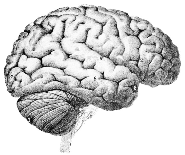 Figure 1. Researchers from University of California Los Angeles found that microstimulation of the right entorhinal region of the brain improved memory specificity of epileptic subjects.