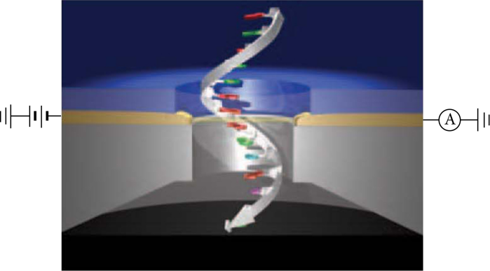 Figure 1. Researchers from Arizona State University found conductive properties in human integrin protein using Scanning Tunnel Microscopy. The image depicts this technique with a single strand of DNA.