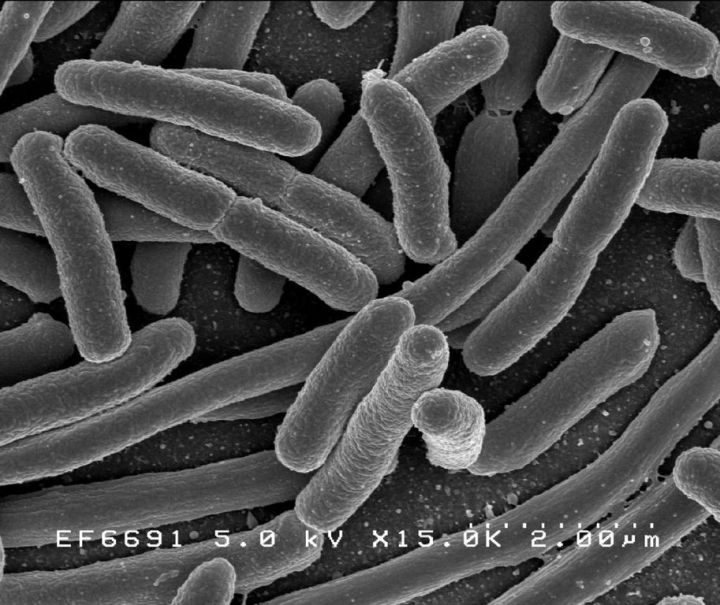 gut_microbiota.jpg