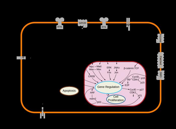 IGF-2_Cancer.png
