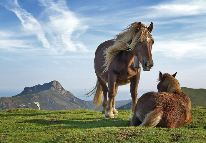 horses-field.jpg