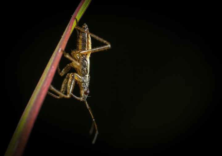crickets.jpeg