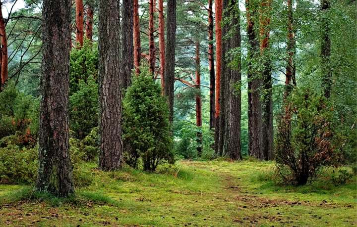 treesintheforest.jpeg