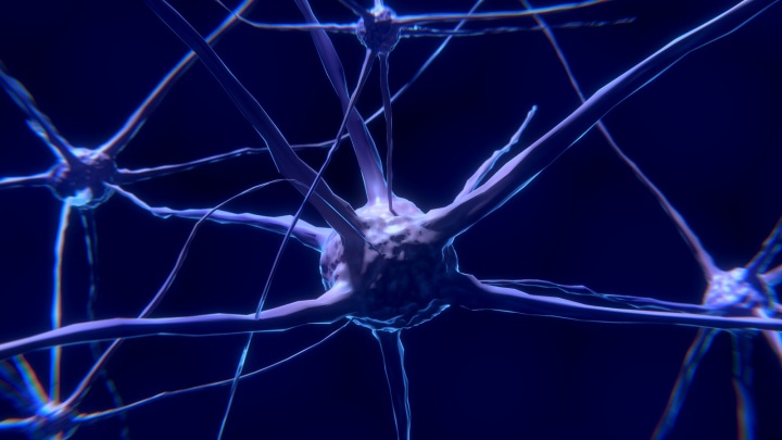 Neuron Brain Nervous System Neurons Nerve Cell