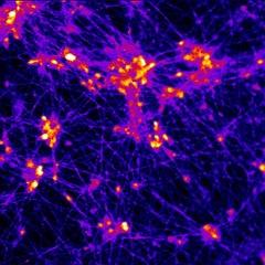 neuronsfiring